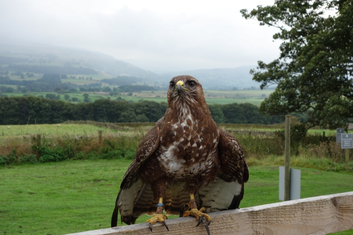 We got to see some falconry while we were there as well which was great!